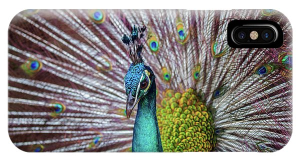 Dancing Indian Peacock  IPhone Case