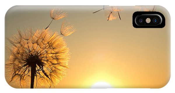 Orange Color iPhone Case - Dandelion Against The Backdrop Of The by Olga Zarytska