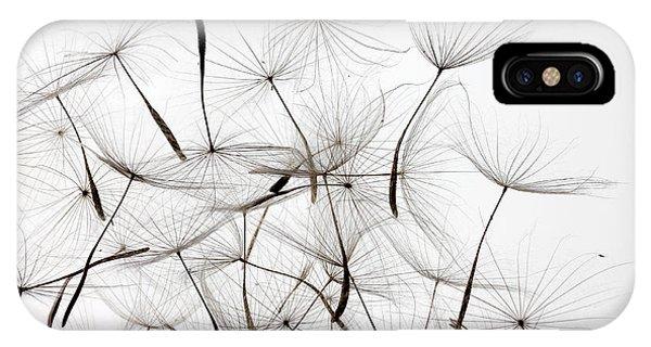 Botany iPhone Case - Dandelion Seeds Over White Background by Alexander Sviridov