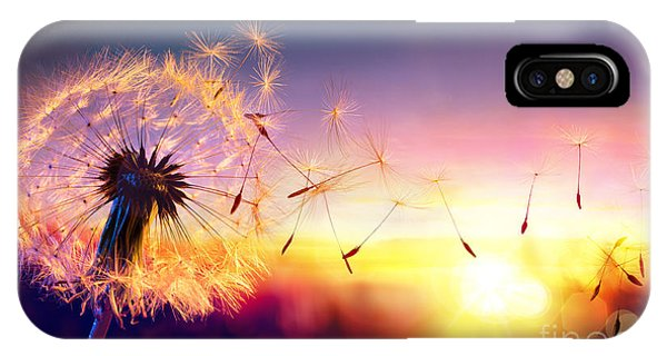 Seeds iPhone Case - Dandelion To Sunset - Freedom To Wish by Romolo Tavani