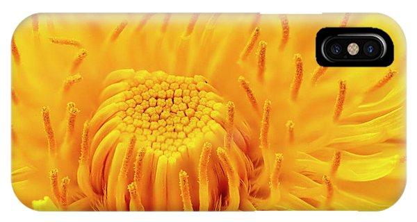Dandelion Flower IPhone Case