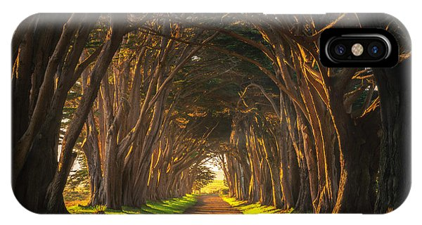 Cypress iPhone Case - Dawn At The Cypress Tree Tunnel by Brad Scott