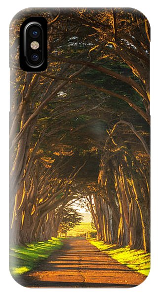 Dawn At The Cypress Tree Tunnel IPhone Case