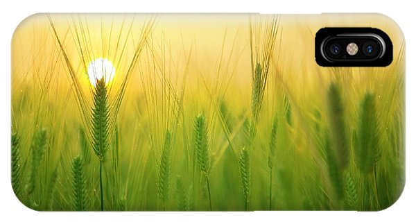 Dawn At The Wheat Field IPhone Case