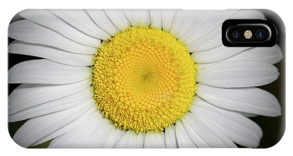 Day's Eye Daisy IPhone Case