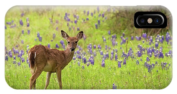Deer In The Bluebonnets IPhone Case