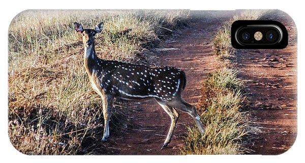 Deer Posing IPhone Case