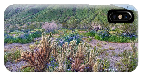 Cylindropuntia Bigelovii iPhone Case - Desert Bluebell And Teddy Bear Cholla by Tim Fitzharris
