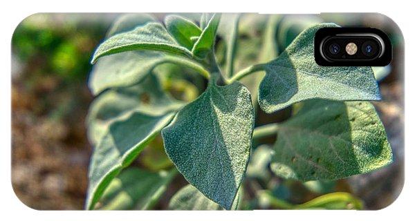 Desert Plant Life IPhone Case