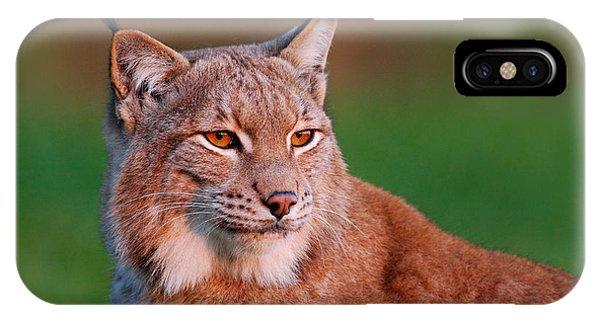 Lynx iPhone Case - Detail Portrait Of Lynx, With Beautiful by Ondrej Prosicky