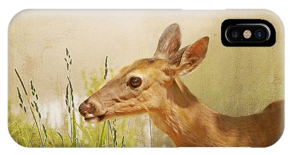 White Tailed Deer iPhone Case - Doe At Dawn by Laura D Young
