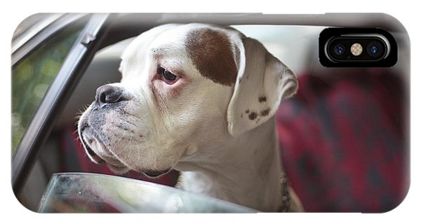 Cute iPhone Case - Dog In A Car by Aerogondo2