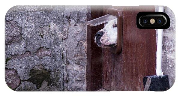 Cute iPhone Case - Dog Poking Its Head Through A Cat Flap by David Muscroft