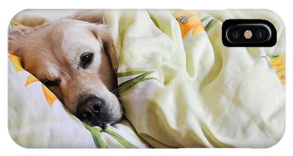 Bed iPhone Case - Dog Sleeps Under The Blanket by Oleg Itkin