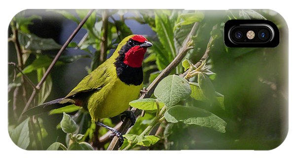IPhone Case featuring the photograph Doherty's Bushshrike by Thomas Kallmeyer