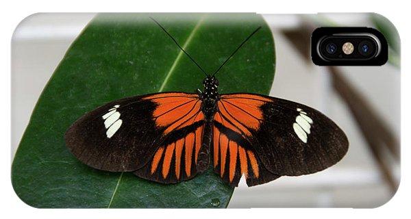 Doris Longwing On Leaf IPhone Case