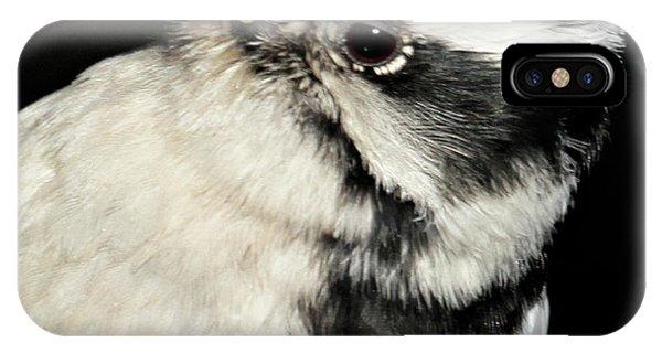 Downy Woodpecker Female IPhone Case
