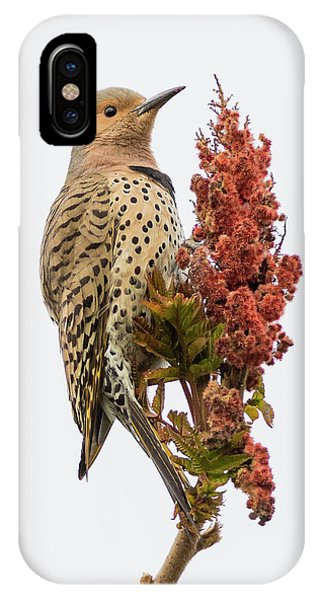 Northern Flicker iPhone Case - Dressed To Kill by Everet Regal