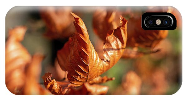 IPhone Case featuring the photograph Dried Autumn Leaves by Scott Lyons