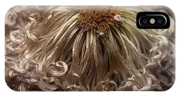 IPhone Case featuring the photograph Dried Chrysanthemum 'satin Ribbon' by Ann Jacobson