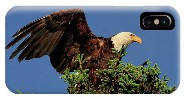 Eagle In Treetop IPhone Case