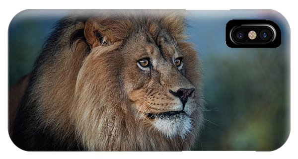 Early Morning Lion Portrait IPhone Case