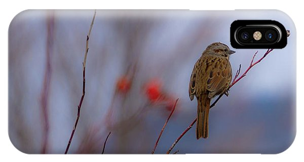 Early Spring Sparrow IPhone Case
