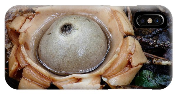 IPhone Case featuring the photograph Earthstar by Daniel Reed