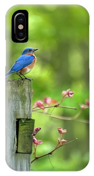 Mo iPhone Case - Eastern Bluebird by Christina Rollo