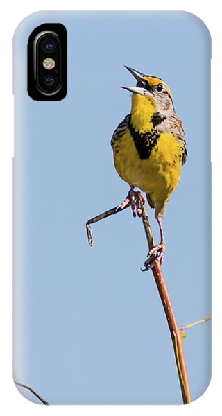 Eastern Meadowlark Singing To The Sun IPhone Case