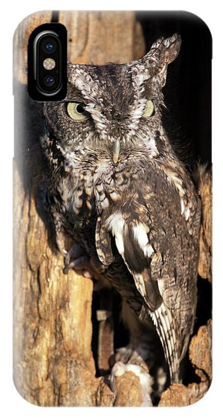 Eastern Screech Owl 92515 IPhone Case