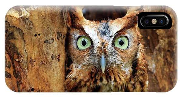 Eastern Screech Owl Perched In A Hole In A Tree IPhone Case