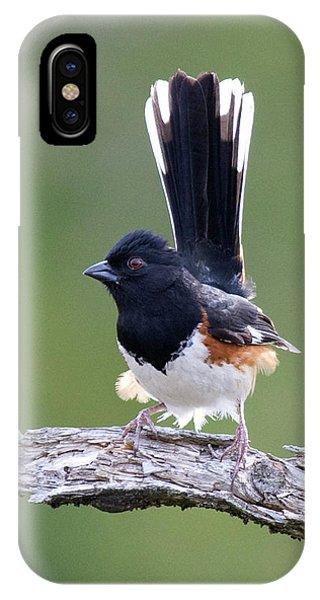 Eastern Towhee 50413 IPhone Case