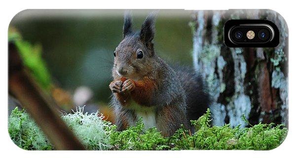 Eating Squirrel IPhone Case