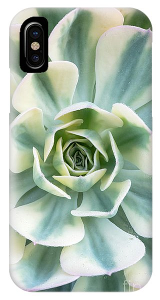 Carousel iPhone Case - Echeveria Compton Carousel by Tim Gainey
