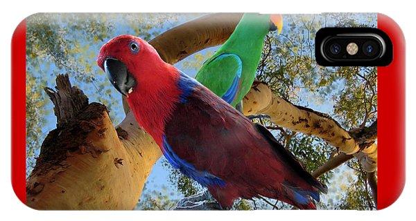 Eclectus Parrots IPhone Case