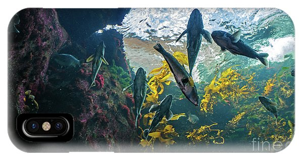 Ecosystem In A Kelp-filled Tank IPhone Case