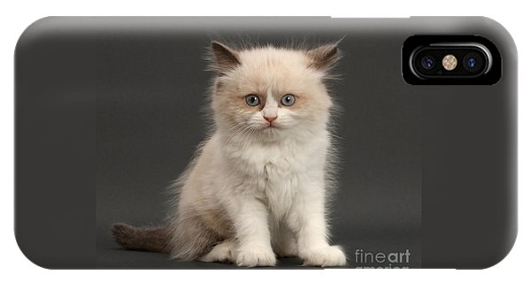 IPhone Case featuring the photograph Electric Kitten by Warren Photographic