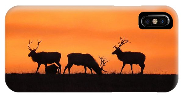 Elk In The Morning Light IPhone Case