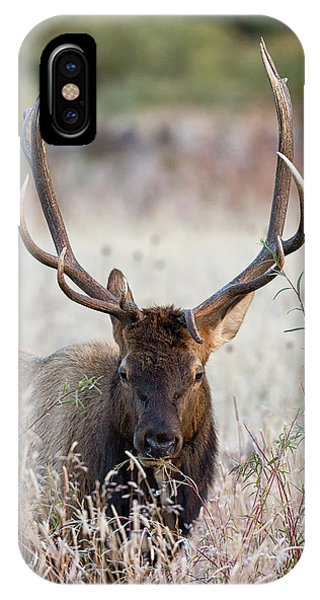 IPhone Case featuring the photograph Elk Portrait by Nathan Bush