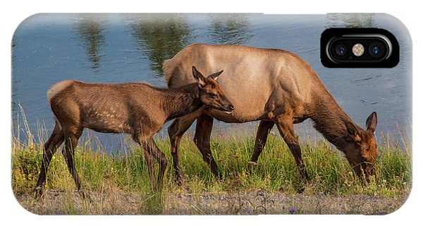 IPhone Case featuring the photograph  Elks Grazing On The Madison River, Wy by Lon Dittrick