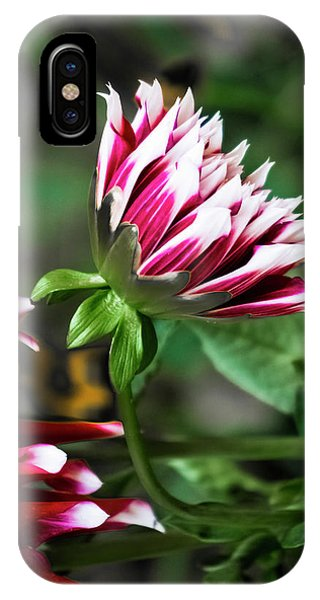 Emerging Dahlia IPhone Case