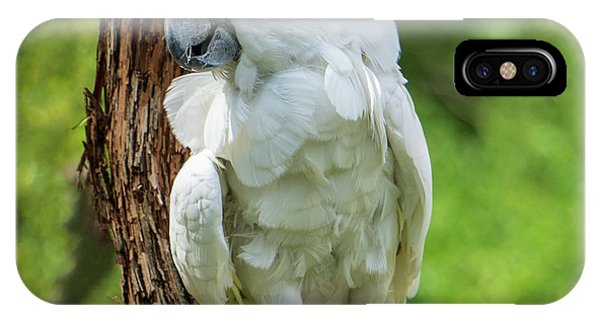 Endangered White Cockatoo IPhone Case