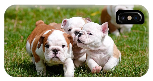 Small iPhone Case - English Bulldog Puppies Playing Outdoors by Otsphoto
