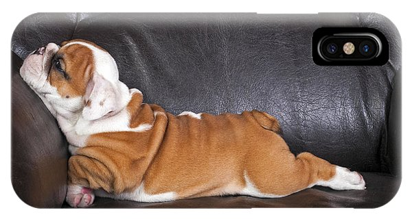 Purebred iPhone Case - English Bulldog Puppy Relaxing On Black by B.stefanov