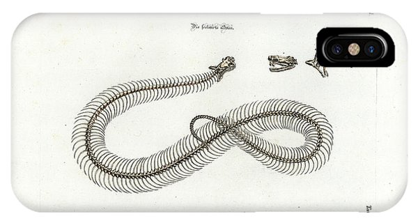 IPhone Case featuring the drawing European Adder Skeleton by Johann Daniel Meyer