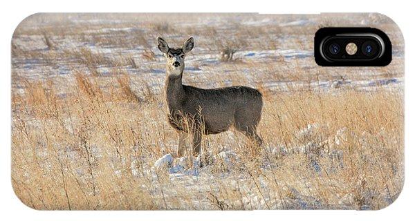 Mule Deer iPhone Case - Eye Contact by Todd Klassy