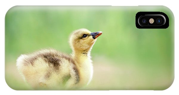 Goslings iPhone Case - Facing A Brand New Future by Roeselien Raimond