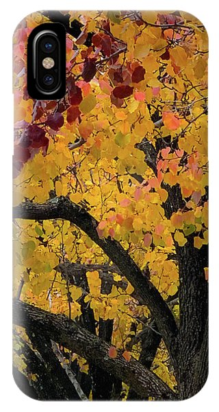 Fall In Carlyle IPhone Case