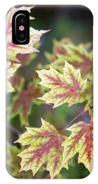 Fall Red And Yellow Leaves 10081501 IPhone Case